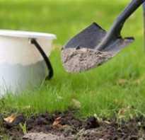 Как ухаживать за сливой. Чем подкормить сливу весной Уход и посадка сливы