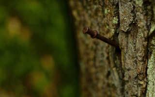 Ржавые гвозди в помощь яблоне. Ради богатого урожая, калининградцы закапывают в грядки гвозди Нахожу на огороде ржавые гвозди