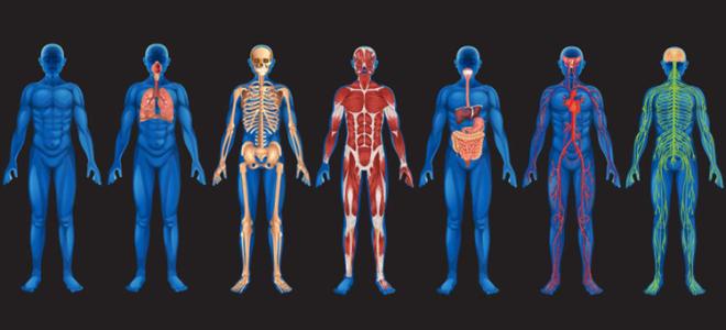 5 малоизвестных фактов о человеческом теле